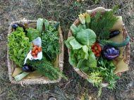 verdure-orto (1)